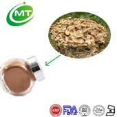 Best price high quality Polyporus Umbellatus Extract